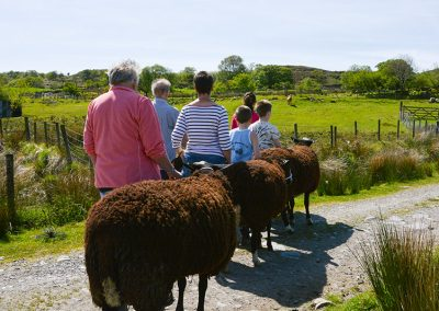 sheep_walking_snowdonia_gal_15